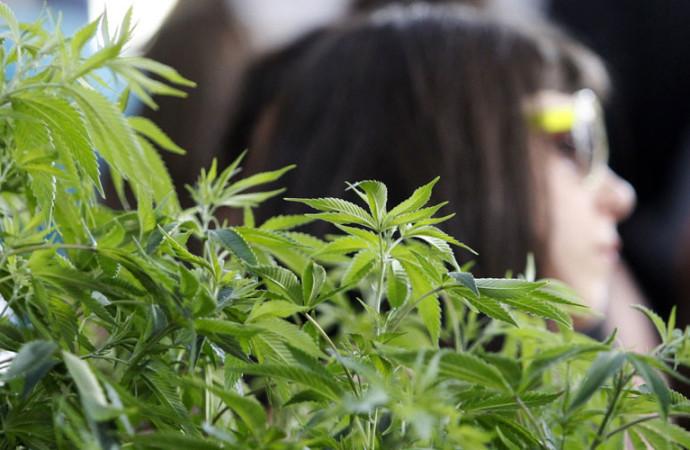 Israeli Researchers Heal Bones with Cannabis Oil