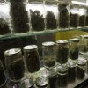Efforts for Expedited Process to Get Medical Marijuana Lauded in Nevada