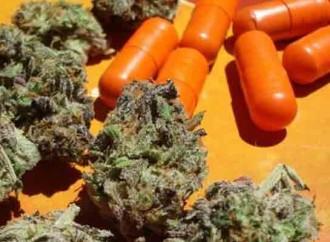 Six Marijuana Scams To Avoid
