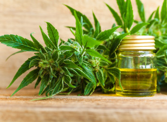 CBD Industry Giant Launches Crowdfunding Campaign