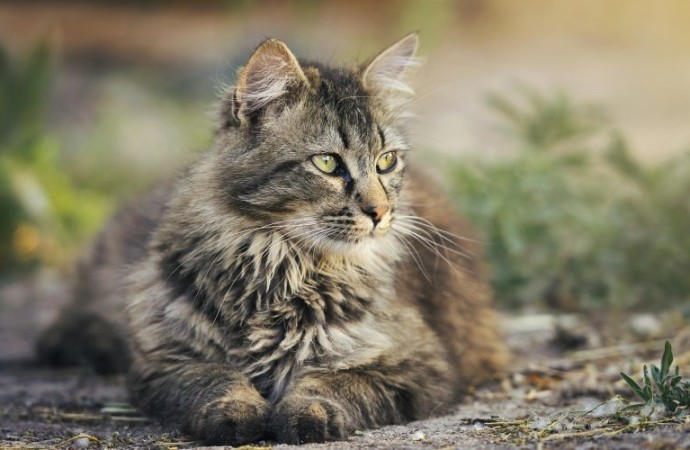 Is Hemp Oil Actually Safe for Cats?