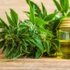 NHS plans to test its own cannabis oil