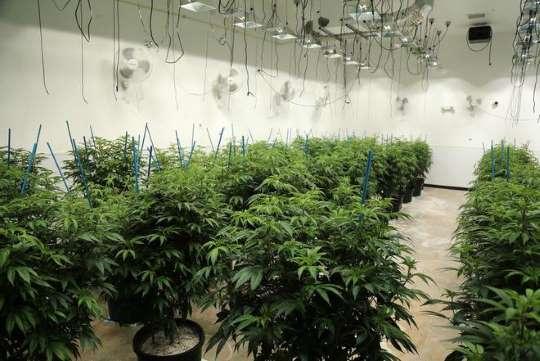 Dissatisfaction with Ohio's medical marijuana program is widespread