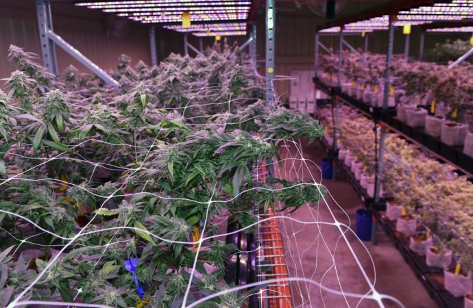 Peek inside the Southern University medical marijuana licensee's operation in Baker