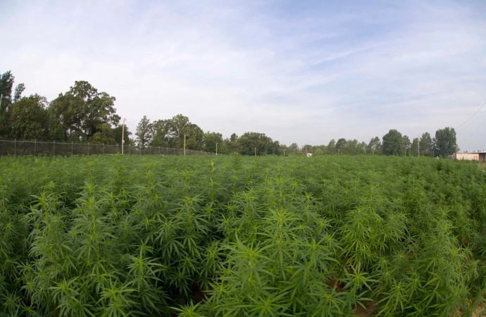 Medical marijuana in Mississippi approved with Initiative 65 vote. Here's what that means