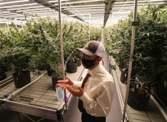 From roses to weed: Apopka flower grower moves into the medical marijuana business